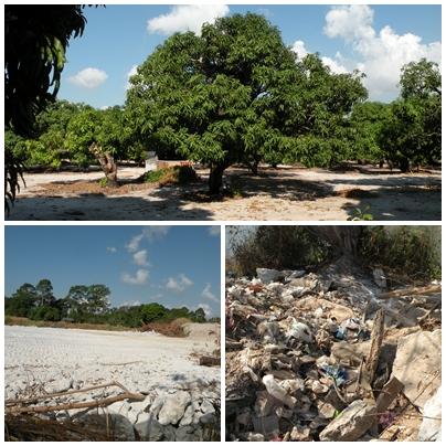 망고농장(위)과 석고폐기물과 쓰레기더미(사진=유예지)