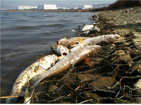 ▲ 2012년 10월 26일 구미 낙동강변