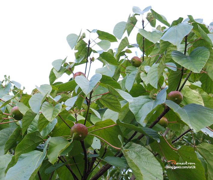 유동나무2